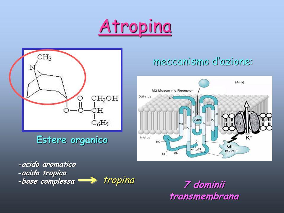 Atropina Estere organico -acido aromatico -acido tropico -base complessa meccanismo dazione: 7 dominii transmembrana tropina