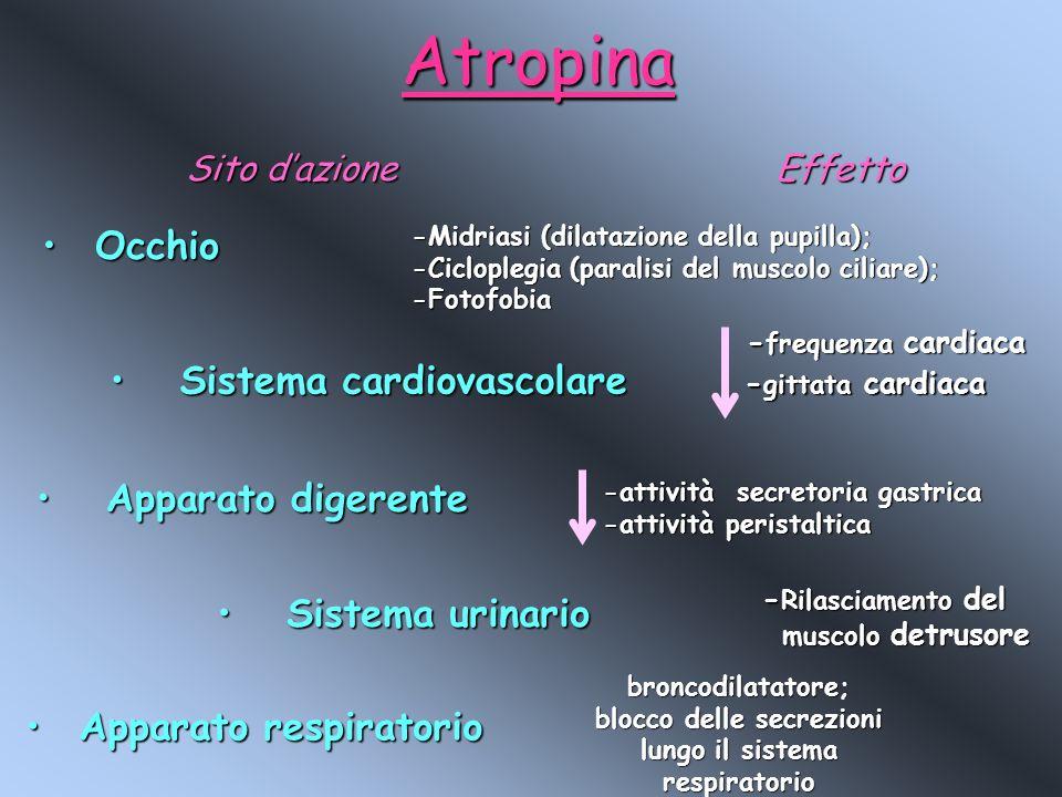 Atropina Sito dazione OcchioOcchio -Midriasi (dilatazione della pupilla); -Cicloplegia (paralisi del muscolo ciliare); -Fotofobia Sistema cardiovascol