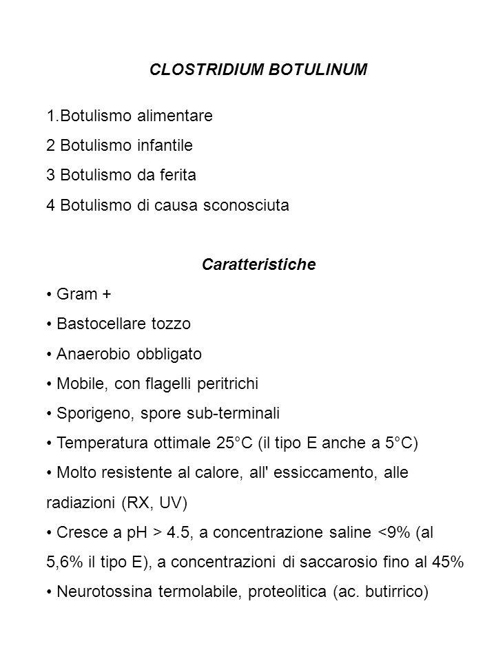 CLOSTRIDIUM BOTULINUM 1.Botulismo alimentare 2 Botulismo infantile 3 Botulismo da ferita 4 Botulismo di causa sconosciuta Caratteristiche Gram + Basto