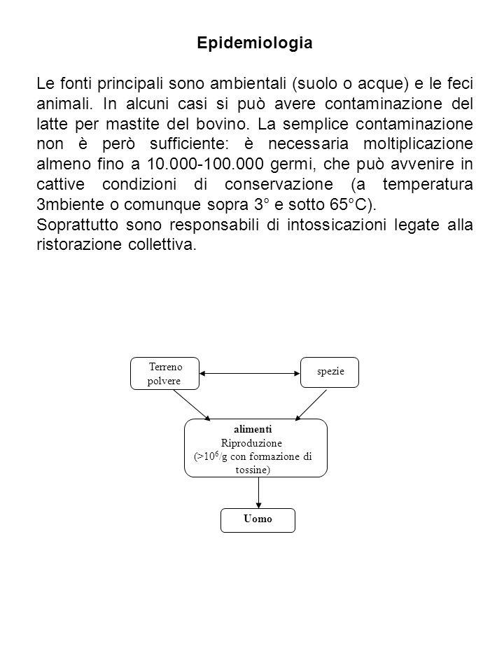 Epidemiologia Le fonti principali sono ambientali (suolo o acque) e le feci animali. In alcuni casi si può avere contaminazione del latte per mastite