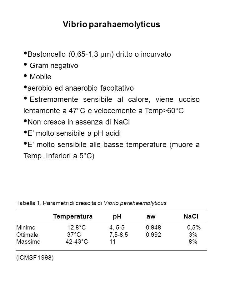 Vibrio parahaemolyticus Bastoncello (0,65-1,3 μm) dritto o incurvato Gram negativo Mobile aerobio ed anaerobio facoltativo Estremamente sensibile al c