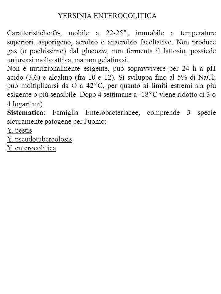 YERSINIA ENTEROCOLITICA Caratteristiche:G-, mobile a 22-25°, immobile a temperature superiori, asporigeno, aerobio o anaerobio facoltativo. Non produc