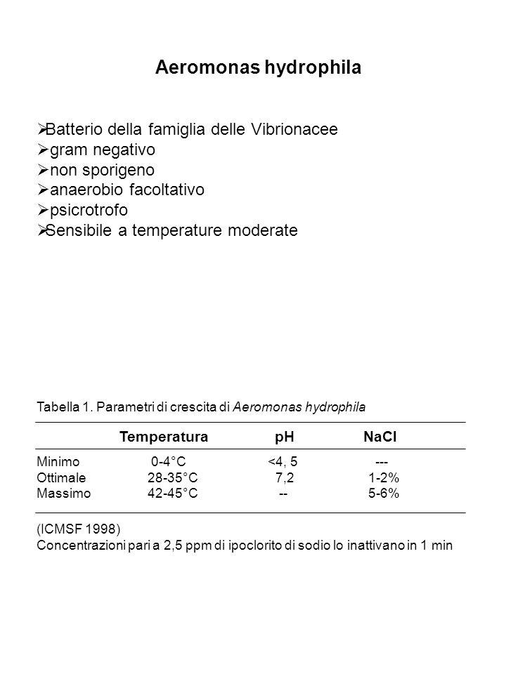 Aeromonas hydrophila Batterio della famiglia delle Vibrionacee gram negativo non sporigeno anaerobio facoltativo psicrotrofo Sensibile a temperature m