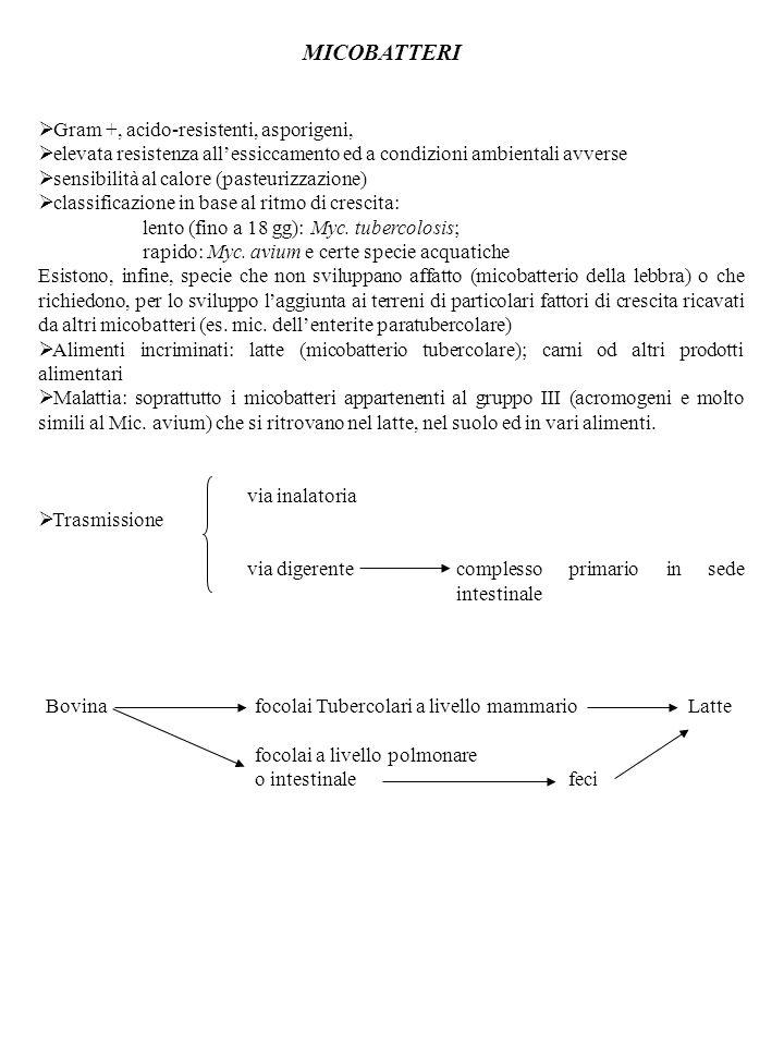 MICOBATTERI Gram +, acido-resistenti, asporigeni, elevata resistenza allessiccamento ed a condizioni ambientali avverse sensibilità al calore (pasteur