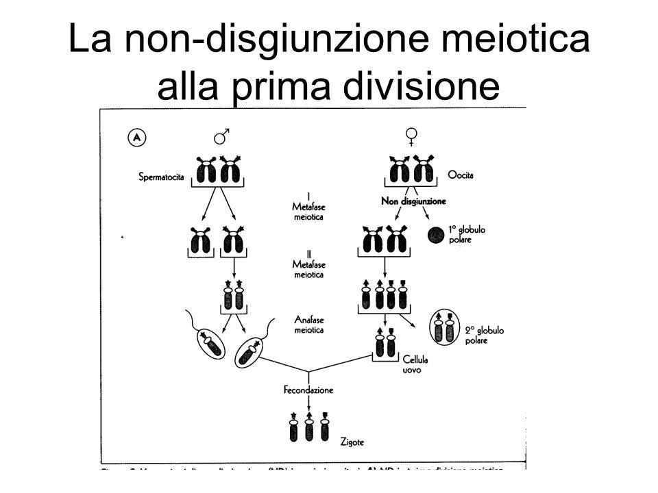 La non-disgiunzione meiotica alla prima divisione