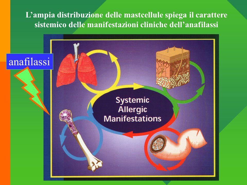 anafilassi Lampia distribuzione delle mastcellule spiega il carattere sistemico delle manifestazioni cliniche dellanafilassi
