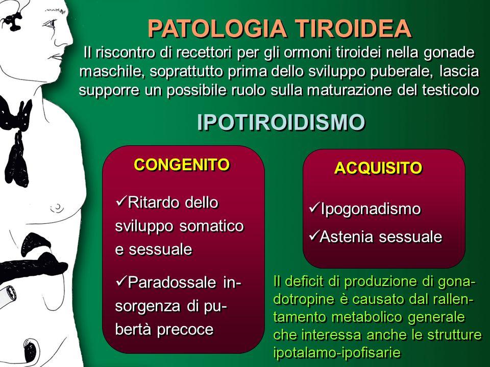 PATOLOGIA TIROIDEA Il riscontro di recettori per gli ormoni tiroidei nella gonade maschile, soprattutto prima dello sviluppo puberale, lascia supporre