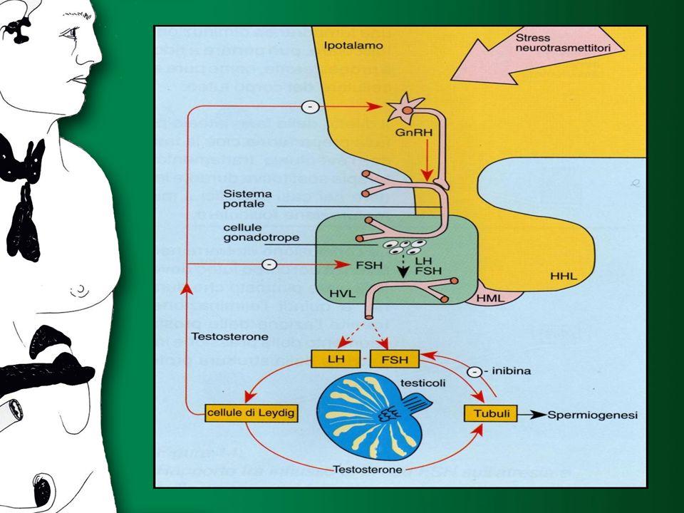 IPERPROLATTINEMIE AZIONE DELLA PRL SULLA FUNZIONE IPOTALAMO-IPOFISI-TESTICOLO MECCANISMI DIRETTI - Macroadenomi ridotta secrezione di gonadotropi- ne per riduzione del N° di cellule ipofisari secernenti MECCANISMI DIRETTI - Macroadenomi ridotta secrezione di gonadotropi- ne per riduzione del N° di cellule ipofisari secernenti MECCANISMI INDIRETTI - Soppressione del rilascio del GnRH ipotalamico mediato da un comples- so circuito neuroendocrino intraipo- talamico che coinvolge CRH ed op- pioidi endrogeni