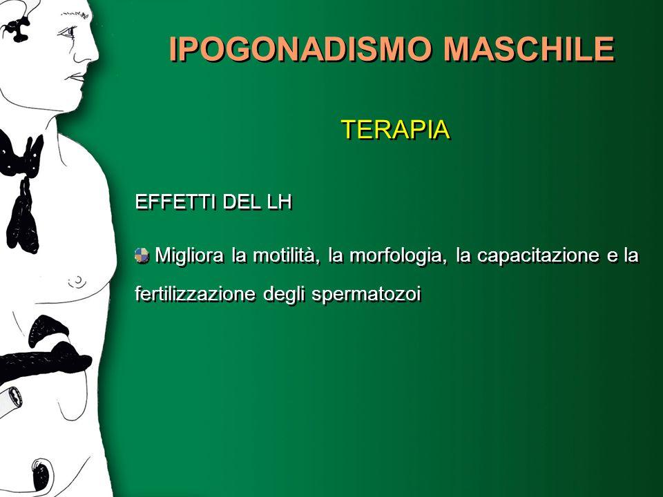 IPOGONADISMO MASCHILE TERAPIA EFFETTI DEL LH Migliora la motilità, la morfologia, la capacitazione e la fertilizzazione degli spermatozoi TERAPIA EFFE