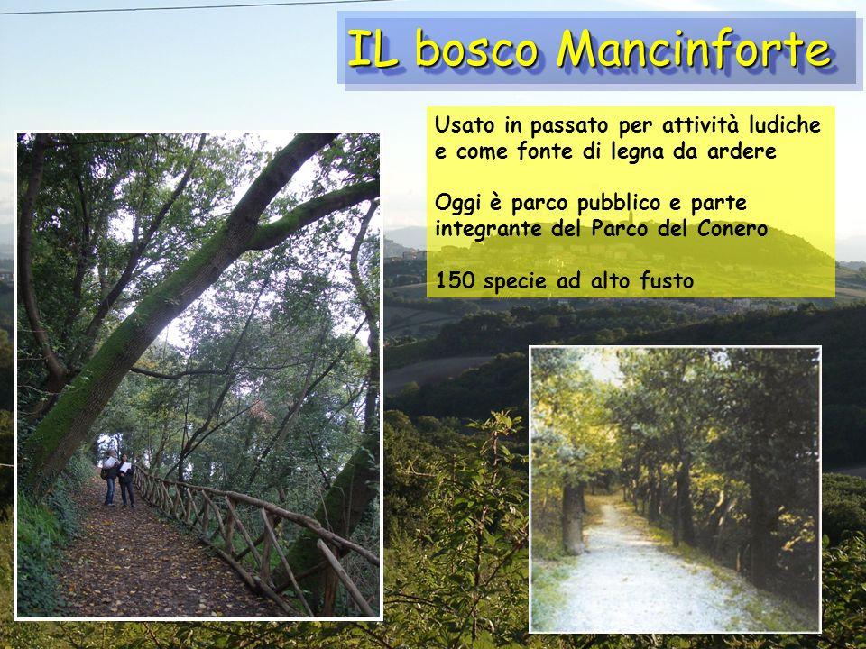 IL bosco Mancinforte Usato in passato per attività ludiche e come fonte di legna da ardere Oggi è parco pubblico e parte integrante del Parco del Cone