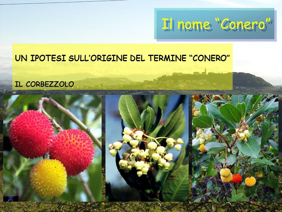 Il nome Conero UN IPOTESI SULLORIGINE DEL TERMINE CONERO IL CORBEZZOLO