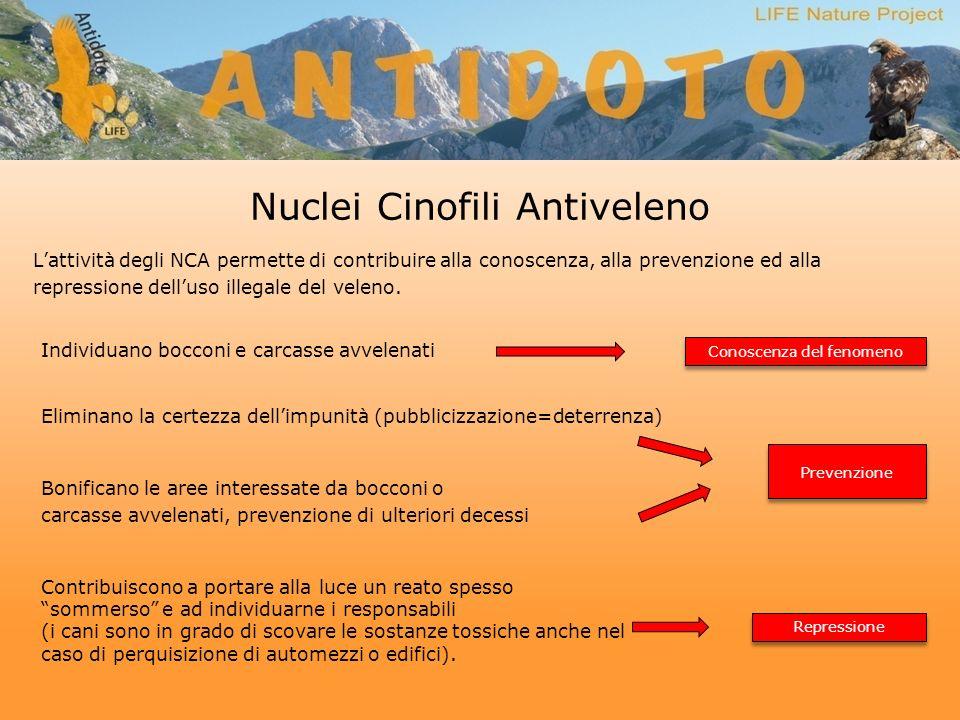 Nuclei Cinofili Antiveleno Prevenzione Repressione Conoscenza del fenomeno Lattività degli NCA permette di contribuire alla conoscenza, alla prevenzione ed alla repressione delluso illegale del veleno.
