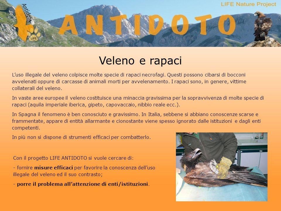 Veleno e rapaci Luso illegale del veleno colpisce molte specie di rapaci necrofagi.