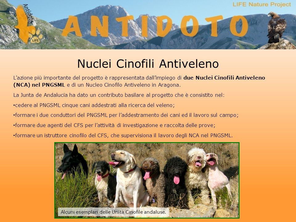 Nuclei Cinofili Antiveleno Lazione più importante del progetto è rappresentata dallimpiego di due Nuclei Cinofili Antiveleno (NCA) nel PNGSML e di un Nucleo Cinofilo Antiveleno in Aragona.