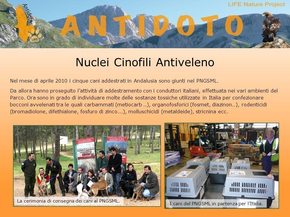 Nuclei Cinofili Antiveleno Nel mese di aprile 2010 i cinque cani addestrati in Andalusia sono giunti nel PNGSML.