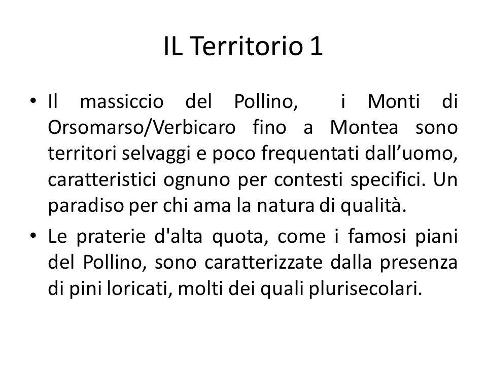 IL Territorio 1 Il massiccio del Pollino, i Monti di Orsomarso/Verbicaro fino a Montea sono territori selvaggi e poco frequentati dalluomo, caratteristici ognuno per contesti specifici.