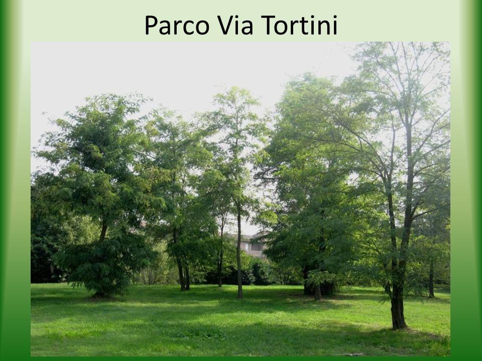 Parco Via Tortini