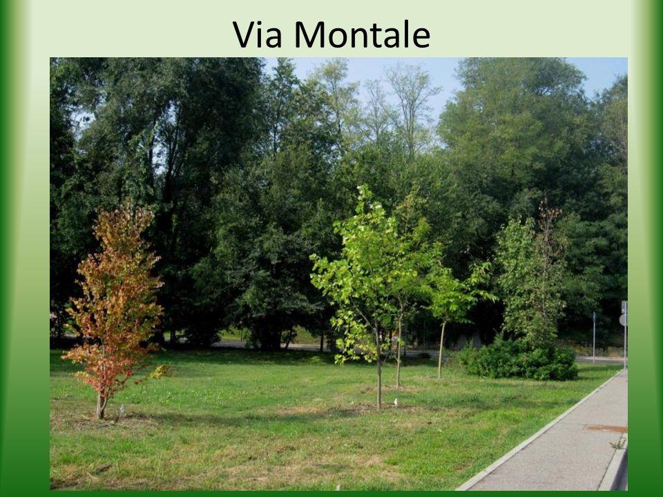 Via Montale