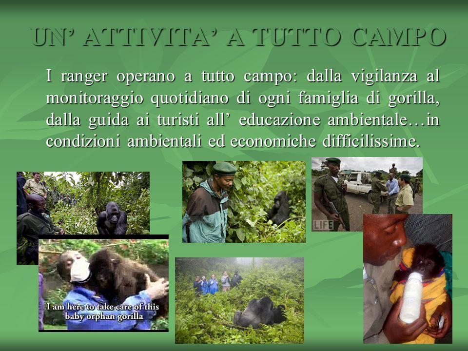 UN ATTIVITA A TUTTO CAMPO I ranger operano a tutto campo: dalla vigilanza al monitoraggio quotidiano di ogni famiglia di gorilla, dalla guida ai turis
