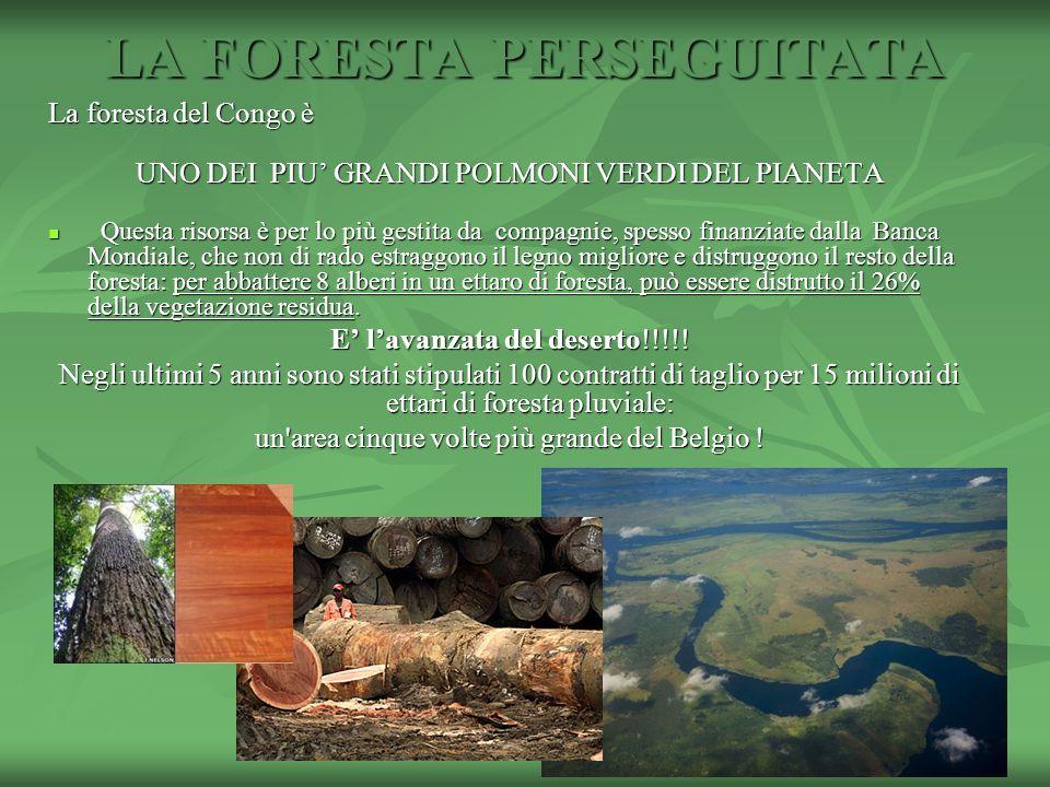 LA FORESTA PERSEGUITATA La foresta del Congo è UNO DEI PIU GRANDI POLMONI VERDI DEL PIANETA Questa risorsa è per lo più gestita da compagnie, spesso f