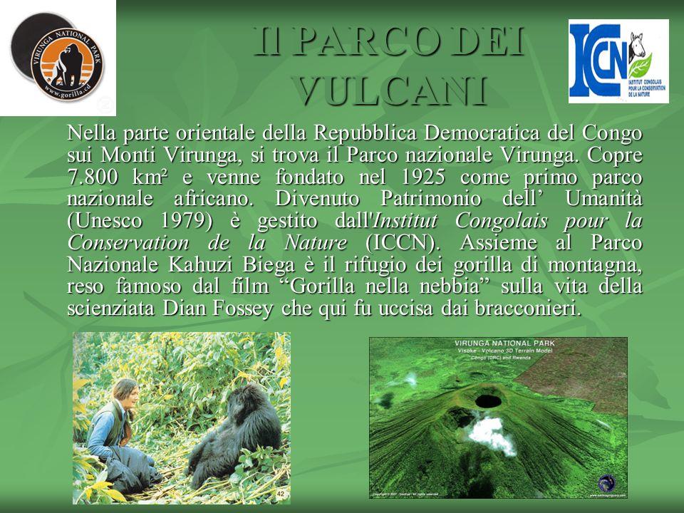 Il PARCO DEI VULCANI Nella parte orientale della Repubblica Democratica del Congo sui Monti Virunga, si trova il Parco nazionale Virunga. Copre 7.800