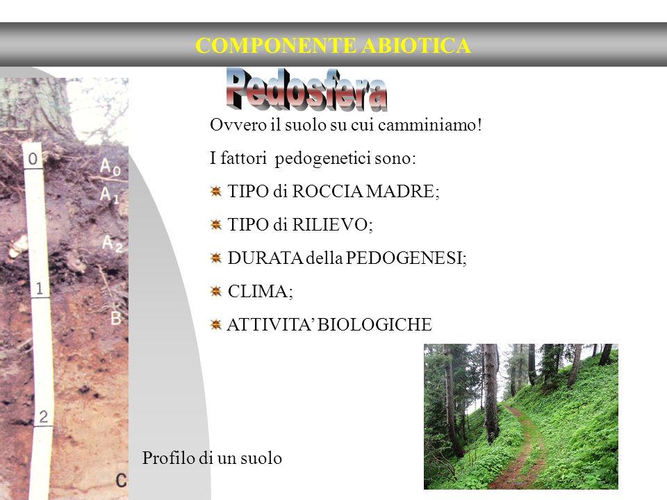 Ovvero il suolo su cui camminiamo! I fattori pedogenetici sono: TIPO di ROCCIA MADRE; TIPO di RILIEVO; DURATA della PEDOGENESI; CLIMA; ATTIVITA BIOLOG