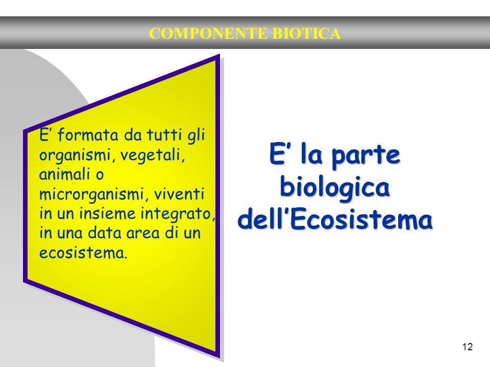 12 COMPONENTE BIOTICA E la parte biologica dellEcosistema E formata da tutti gli organismi, vegetali, animali o microrganismi, viventi in un insieme i