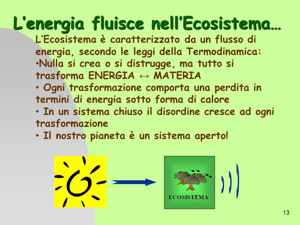 13 Lenergia fluisce nellEcosistema… LEcosistema è caratterizzato da un flusso di energia, secondo le leggi della Termodinamica: Nulla si crea o si dis