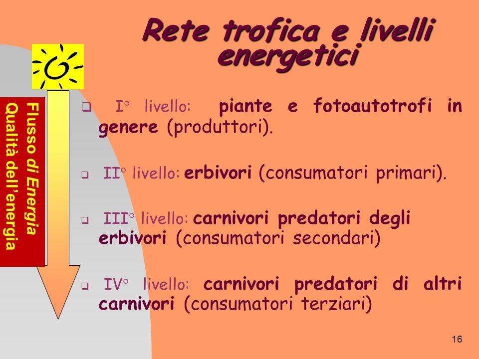 16 Rete trofica e livelli energetici I° livello: piante e fotoautotrofi in genere (produttori). II° livello: erbivori (consumatori primari). III° live