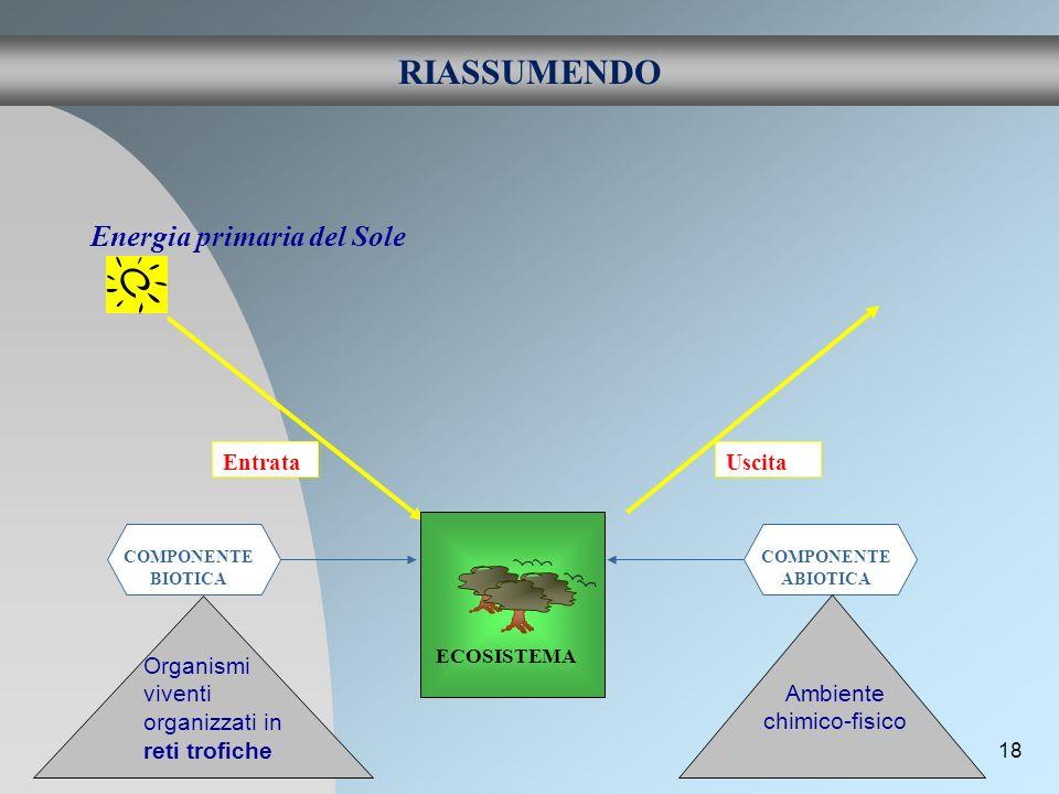 18 RIASSUMENDO Energia primaria del Sole Entrata Uscita ECOSISTEMA COMPONENTE BIOTICA COMPONENTE ABIOTICA Ambiente chimico-fisico Organismi viventi or