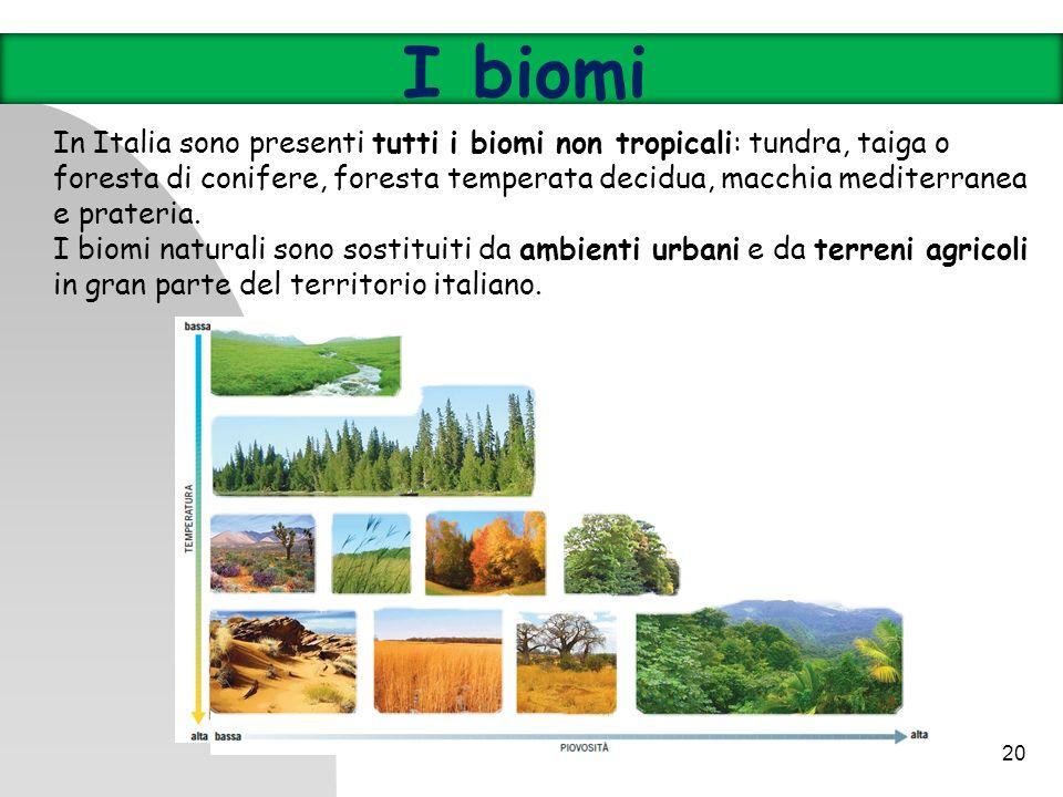 20 In Italia sono presenti tutti i biomi non tropicali: tundra, taiga o foresta di conifere, foresta temperata decidua, macchia mediterranea e prateri