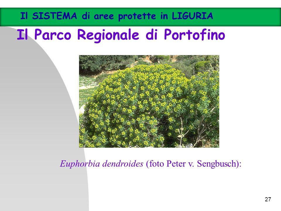 27 Il SISTEMA di aree protette in LIGURIA Il Parco Regionale di Portofino Euphorbia dendroides (foto Peter v. Sengbusch):