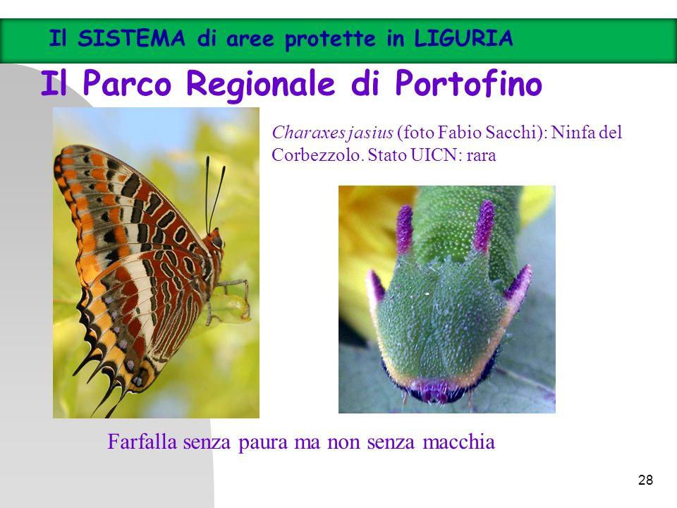 28 Il SISTEMA di aree protette in LIGURIA Il Parco Regionale di Portofino Charaxes jasius (foto Fabio Sacchi): Ninfa del Corbezzolo. Stato UICN: rara