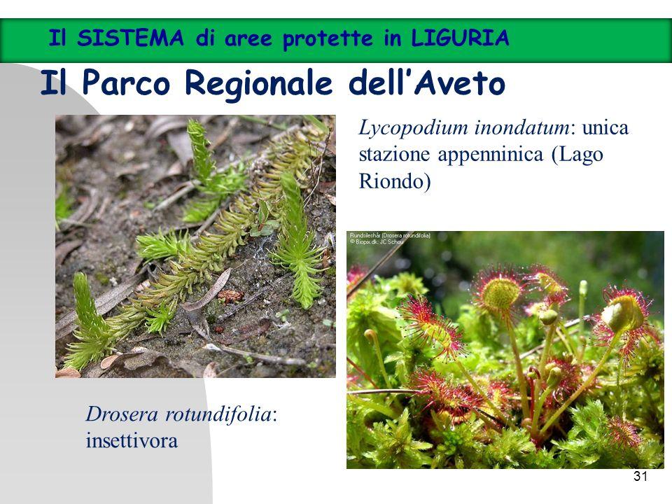 31 Il SISTEMA di aree protette in LIGURIA Il Parco Regionale dellAveto Lycopodium inondatum: unica stazione appenninica (Lago Riondo) Drosera rotundif