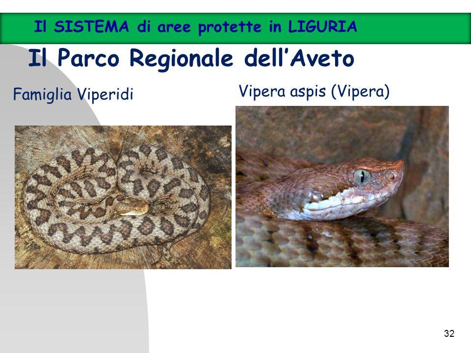 32 Il SISTEMA di aree protette in LIGURIA Il Parco Regionale dellAveto Vipera aspis (Vipera) Famiglia Viperidi