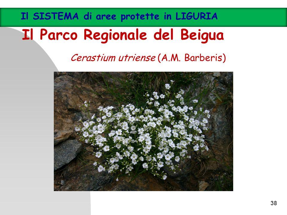 Cerastium utriense (A.M. Barberis) Il SISTEMA di aree protette in LIGURIA Il Parco Regionale del Beigua 38