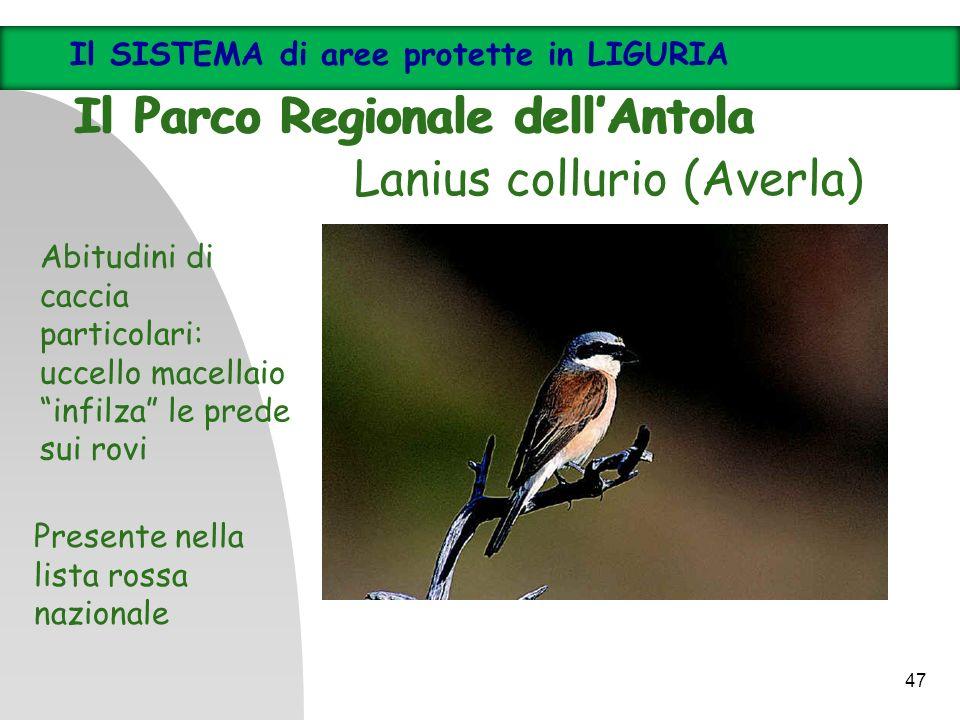 Lanius collurio (Averla) Abitudini di caccia particolari: uccello macellaio infilza le prede sui rovi Presente nella lista rossa nazionale Il SISTEMA