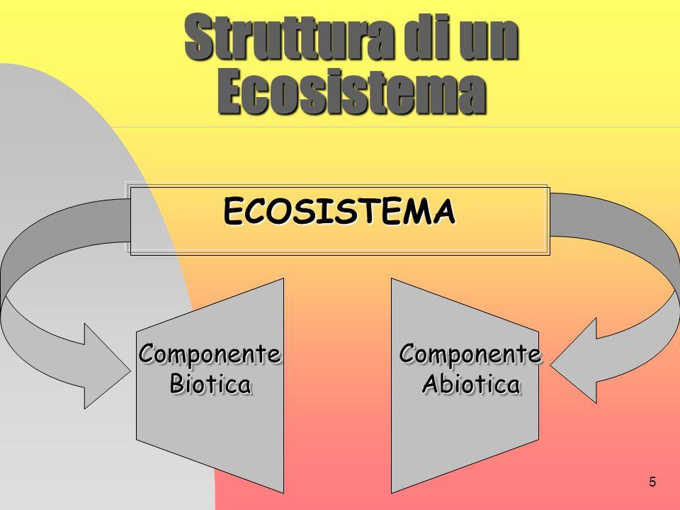 5 Struttura di un Ecosistema ECOSISTEMA Componente Biotica Componente Abiotica