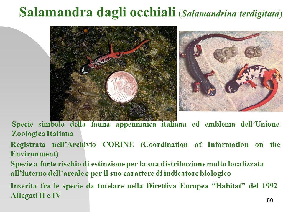 Specie simbolo della fauna appenninica italiana ed emblema dellUnione Zoologica Italiana Registrata nellArchivio CORINE (Coordination of Information o