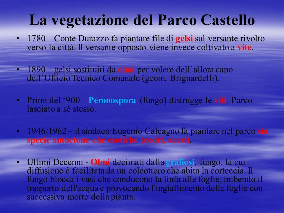 La vegetazione del Parco Castello 1780 – Conte Durazzo fa piantare file di gelsi sul versante rivolto verso la città. Il versante opposto viene invece