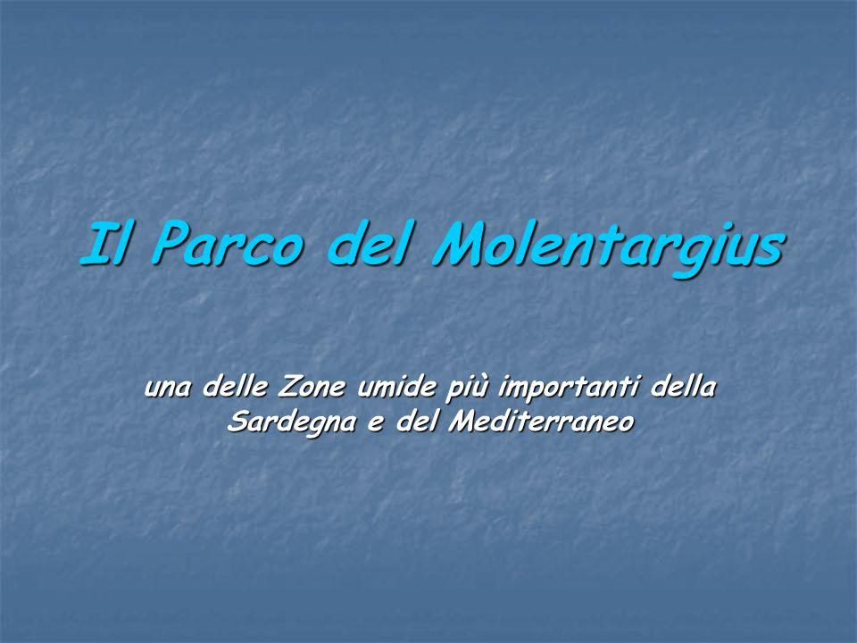 Il Parco del Molentargius una delle Zone umide più importanti della Sardegna e del Mediterraneo