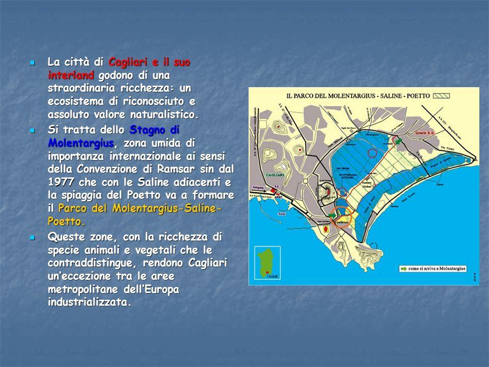 La città di Cagliari e il suo interland godono di una straordinaria ricchezza: un ecosistema di riconosciuto e assoluto valore naturalistico. La città