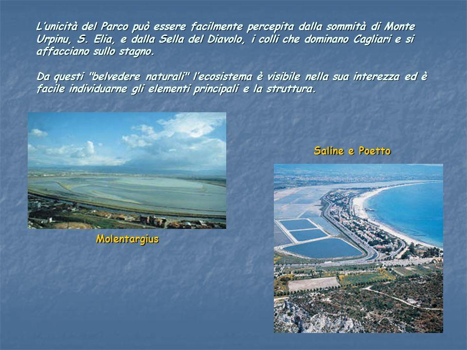 Il versante Nord è dominato dalla struttura urbana che da Cagliari si snoda fino alla città di Quartu S.