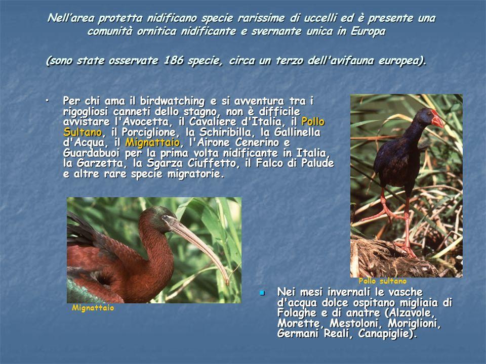 Nellarea protetta nidificano specie rarissime di uccelli ed è presente una comunità ornitica nidificante e svernante unica in Europa (sono state osser