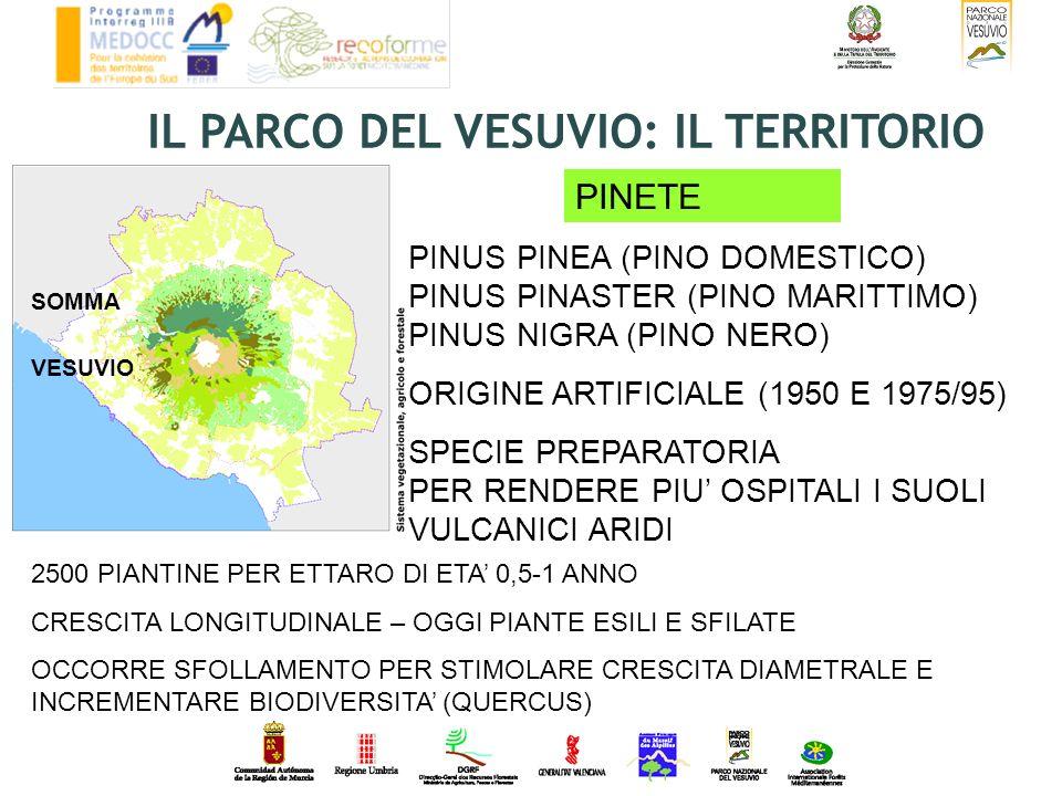SOMMA VESUVIO PINUS PINEA (PINO DOMESTICO) PINUS PINASTER (PINO MARITTIMO) PINUS NIGRA (PINO NERO) ORIGINE ARTIFICIALE (1950 E 1975/95) SPECIE PREPARA
