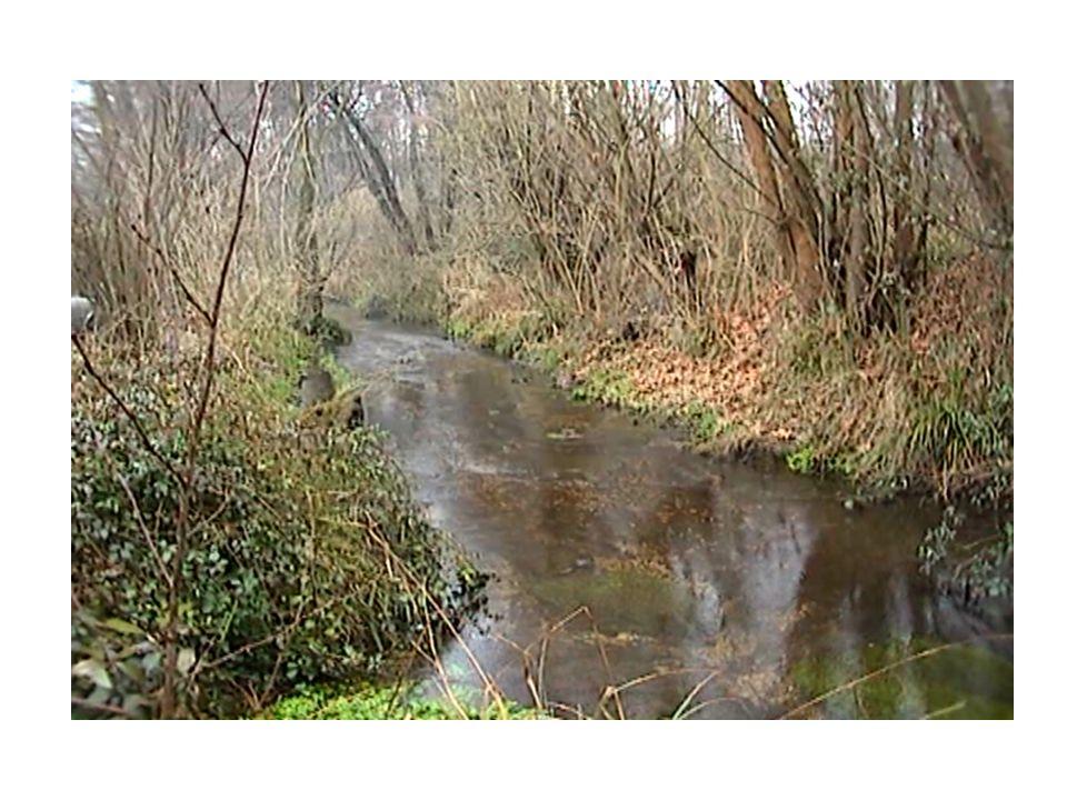 Natura: il fiume CORNO Il fiume Corno (13km) con i suoi affluenti AVENALE, (2km), CORGNOLIZZA (5km), ZUMELLO (5km) viene formato dalle acque sorgive p