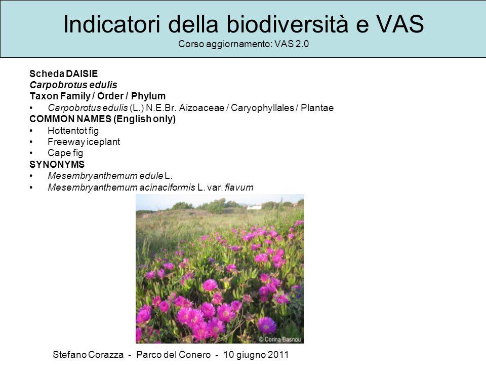 Indicatori della biodiversità e VAS Corso aggiornamento: VAS 2.0 Stefano Corazza - Parco del Conero - 10 giugno 2011 Scheda DAISIE Carpobrotus edulis