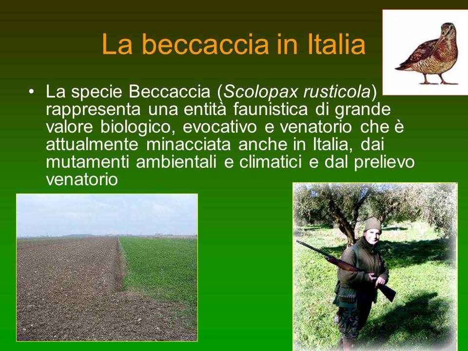 La beccaccia in Italia La specie Beccaccia (Scolopax rusticola) rappresenta una entità faunistica di grande valore biologico, evocativo e venatorio ch