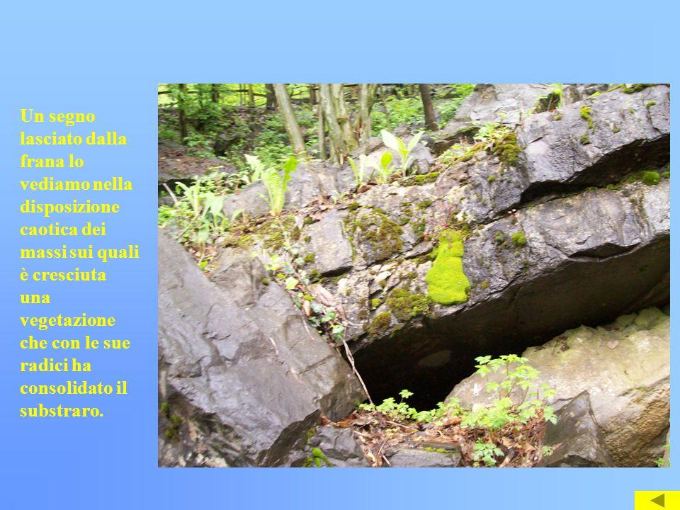 Un segno lasciato dalla frana lo vediamo nella disposizione caotica dei massi sui quali è cresciuta una vegetazione che con le sue radici ha consolida