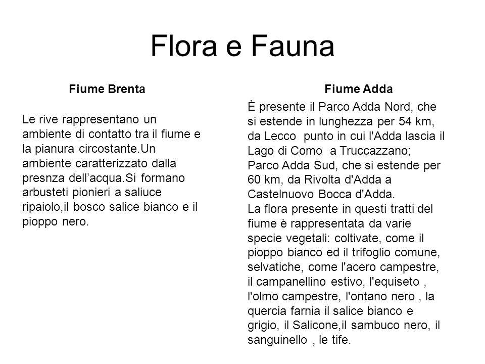 Flora e Fauna Fiume BrentaFiume Adda È presente il Parco Adda Nord, che si estende in lunghezza per 54 km, da Lecco punto in cui l'Adda lascia il Lago